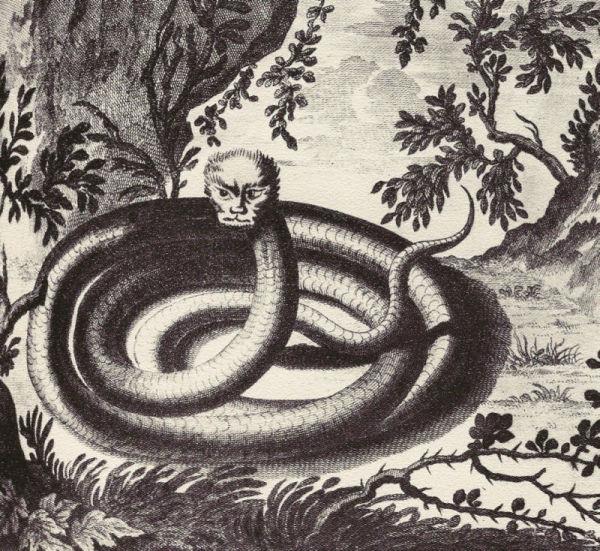 Alps snake