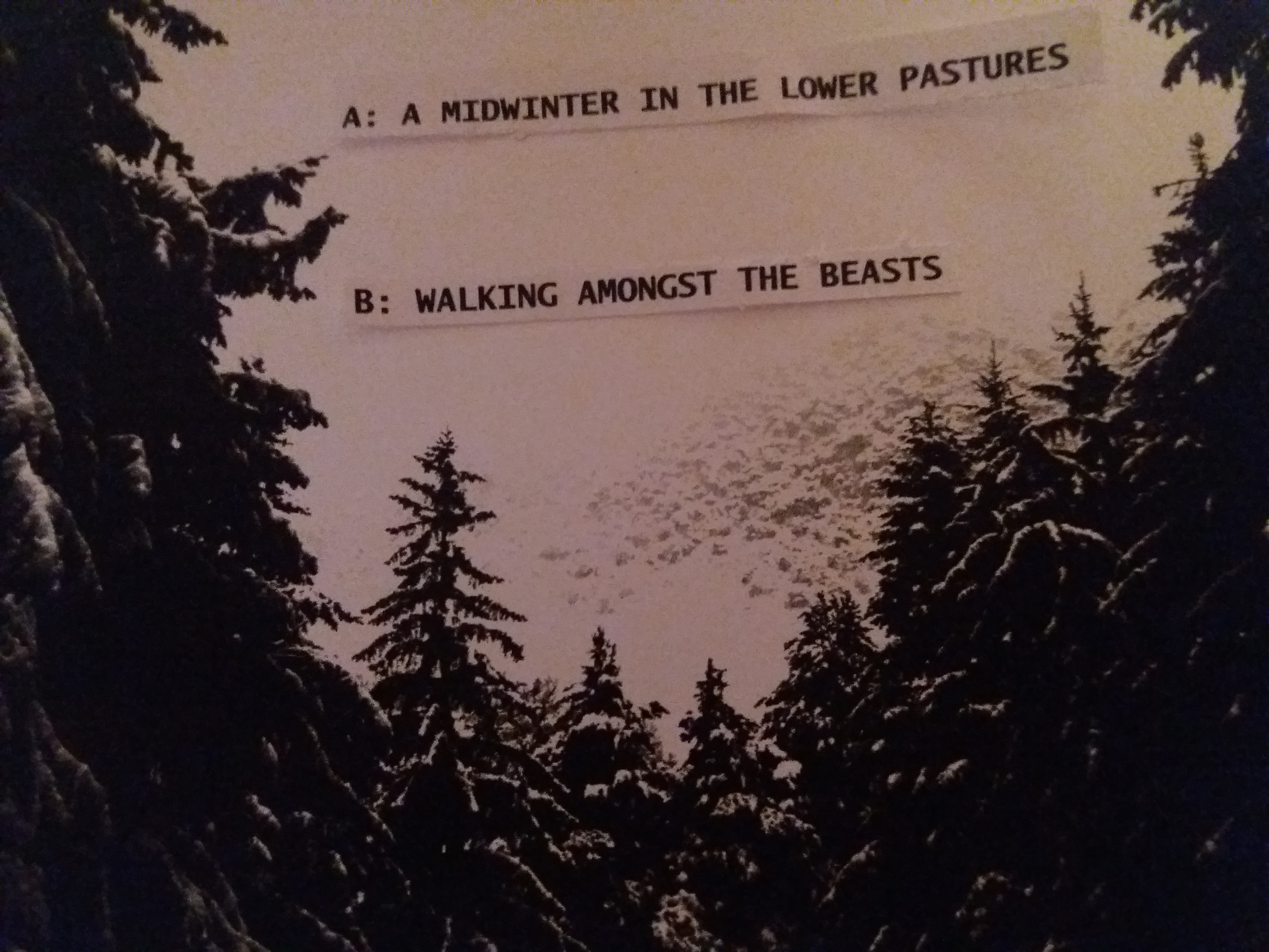 MIDWINTER Back Cover